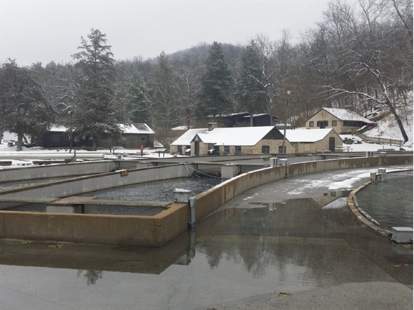 My grandfather managed the hatchery at roaring river in for Roaring river fish hatchery