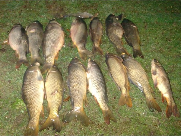 Bow fishing on Table Rock Lake. 14 carp, 148 pounds