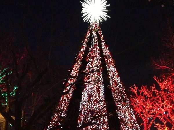The Christmas lights at Silver Dollar City are beautiful