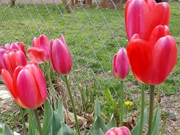 Backyard in Oak Grove in springtime