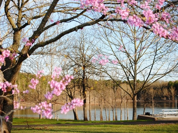 Spring time at Old Hwy 86 campground with campsites are right on Table Rock Lake!