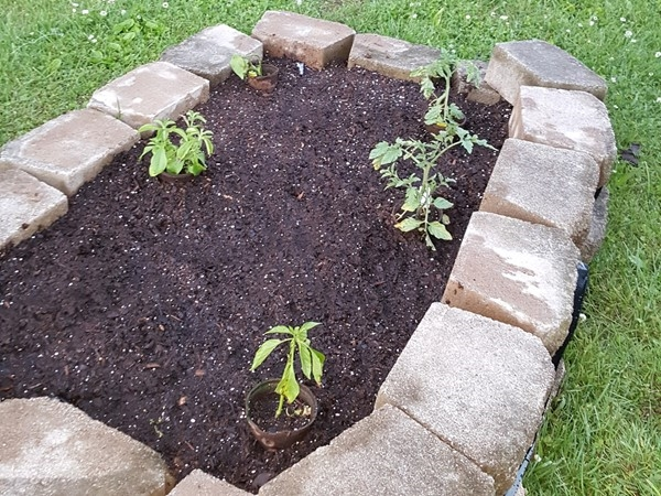 Gardening made easy with raised beds