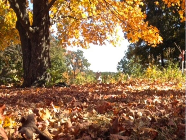 Fall leaves begin to turn around Jefferson City in November. Don't miss out on the seasons beauty