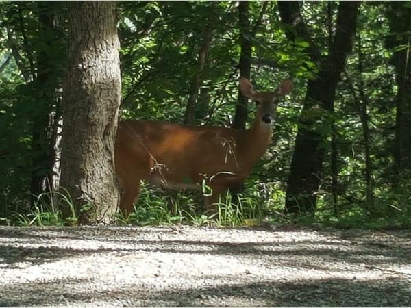 We have deer everywhere