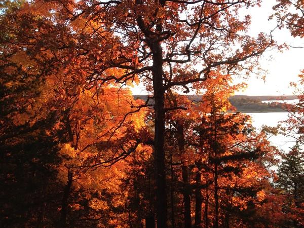 Autumn Leaves on Truman Lake