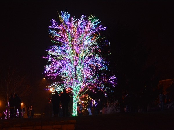 The Magic Tree located in the Town Square at the Village of Cherry Hill
