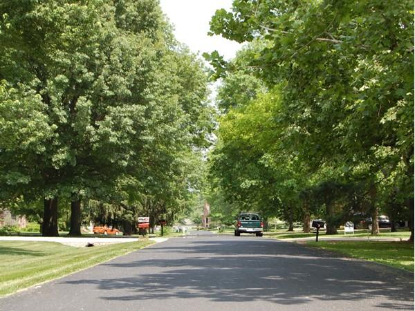 Beautiful tree lined streets in upscale Walnut Hills