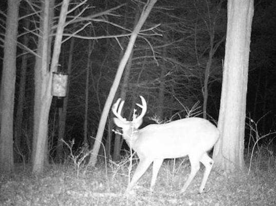 We have a few bucks in Eagle Rock