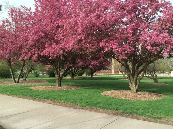 Spring beauty on the campus of Northwest Missouri State University