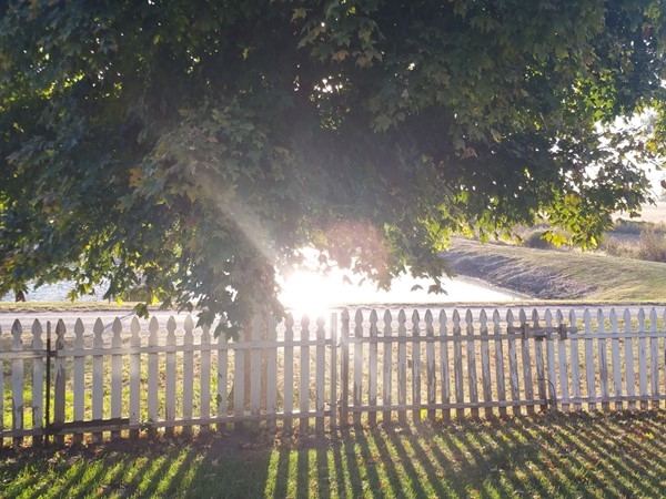Morning sunshine breaking through the tree...simply a beautiful start to the day in Corder