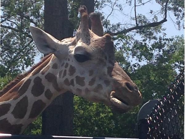 Always fun at the Birmingham Zoo!