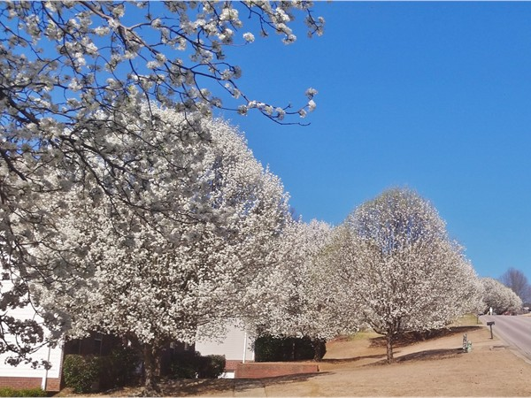 Spring has arrived in Russet Woods located off of South Crest Road in Hoover