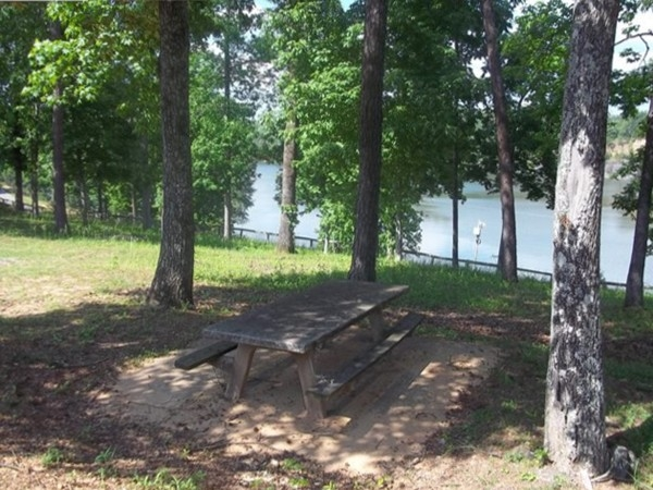 Phelps Center picnic area