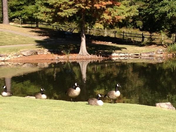 The lake at Aldridge Gardens