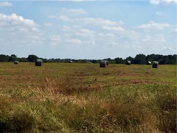 Fresh cut hay field in rural New Brockton