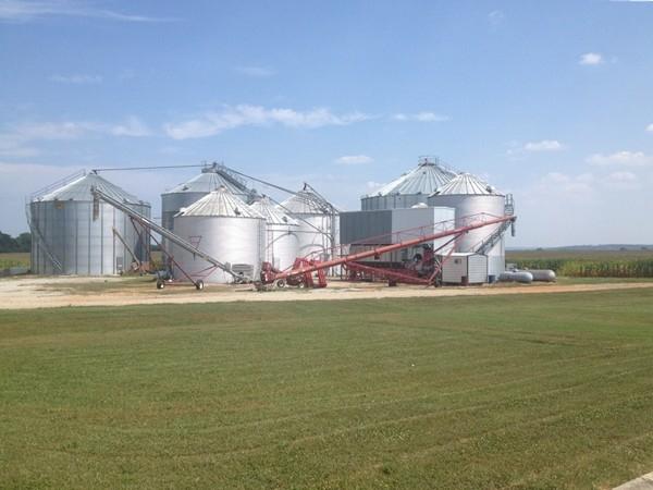 Grain bins on the edge of the corn fields in Toney, AL