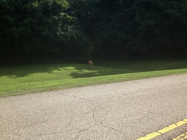 Joe Wheeler State Park. Look closely and you will see the wild deer in the park