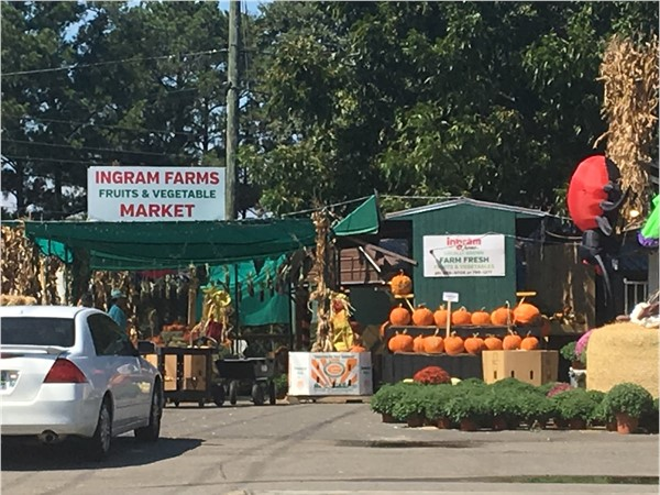Fresh, seasonal vegetables and pumpkins at Ingram Farms Market