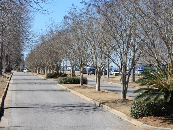 Tree lined streets