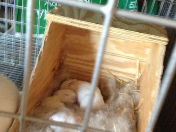 New bunnies on the farm, great country living