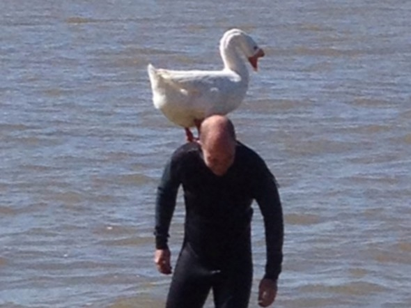 An ongoing love affair for the past five years between this swan and this man