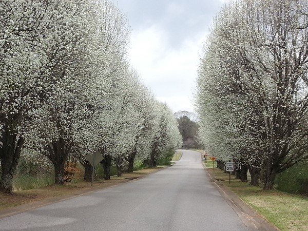 Springtime in Shelby County, Alabama