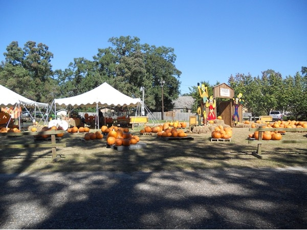 Old Dauphin Way United Methodist Church pumpkin patch