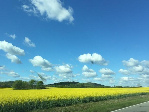 Springtime Alabama pastures