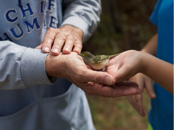 Learning to free a bird after banding at Fort Morgan State Park