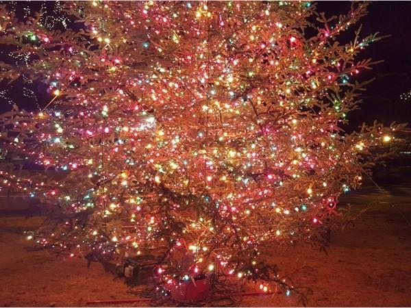 Bromberg's Christmas tree