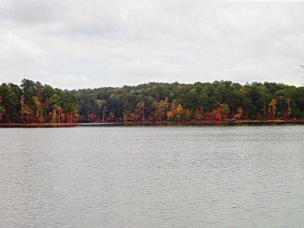 Happy Thanksgiving! Don't have plans? Come visit Lake Wedowee!