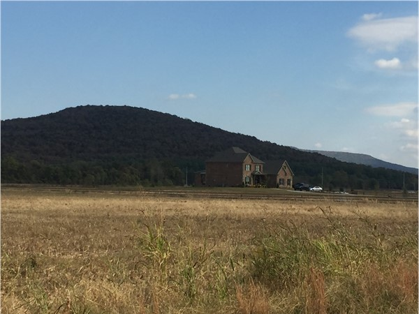 Equine Estate acreage homesites of McMullen with Gurley Mountain and Drake Mountain In view