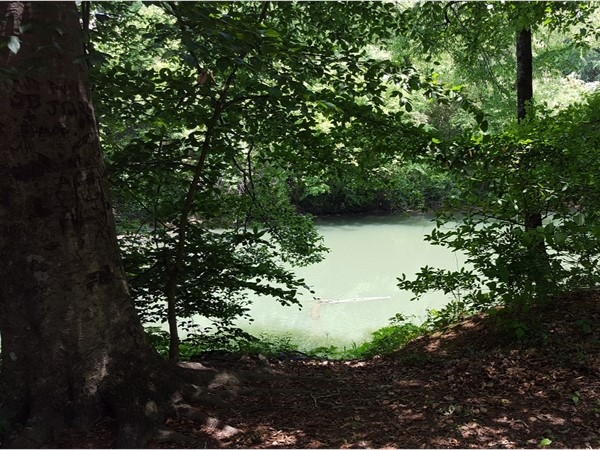Tranquil view of the Cahaba River