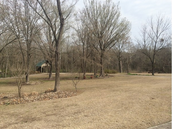 Spring is almost here at the park overlooking Buck Creek.