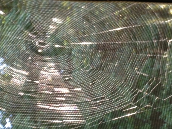 Spider web spun in time for Halloween