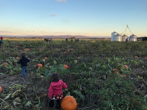 Tate Farms Pumpkin Patch in Meridianville