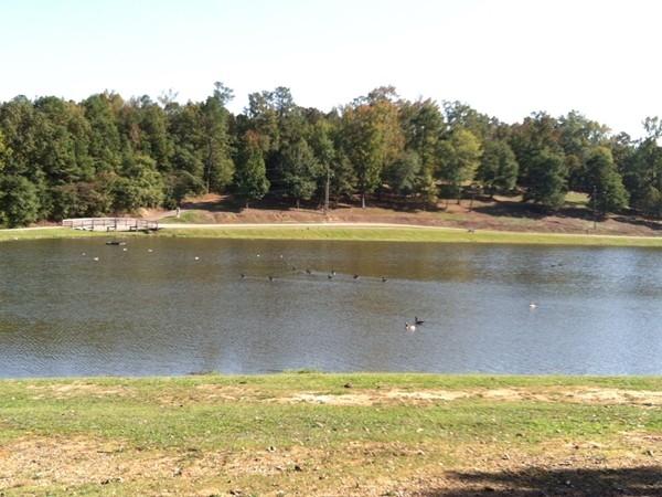 Lake at Helena Park