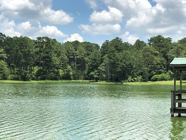 Beautiful day at Geneva County Public Lake