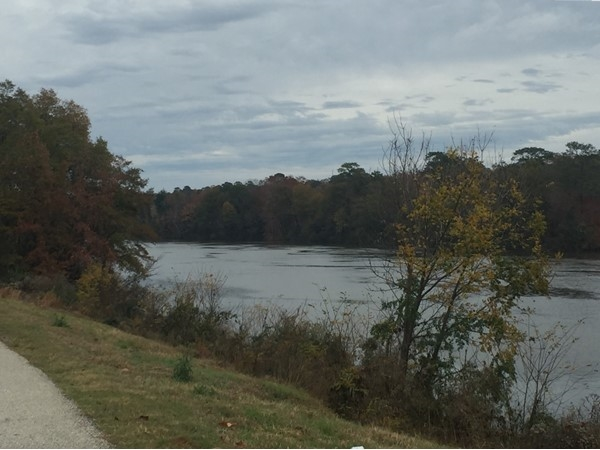 View of the Black Warrior River from The Levee Bar and Grill