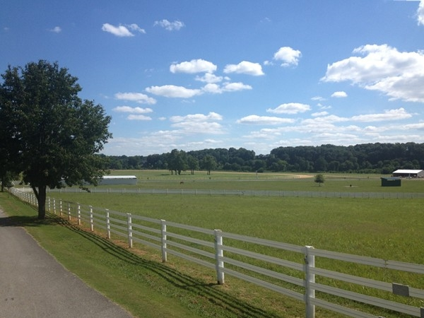 Bluewater Creek Polo Club. A beautiful polo club just east of Killen