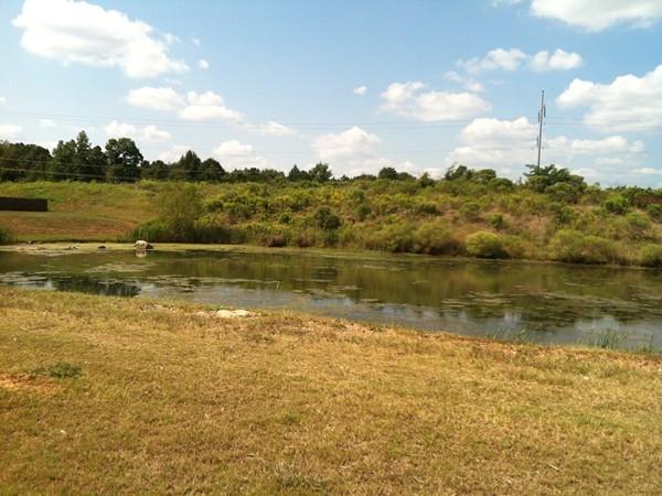 Rosser Cove's stocked fishing pond