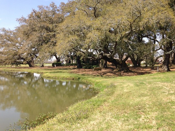 Beautiful view of the common area, pond and piccolo!