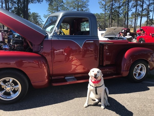 Molly checking out one of the hundreds of antique cars at Swamp Fest 2018