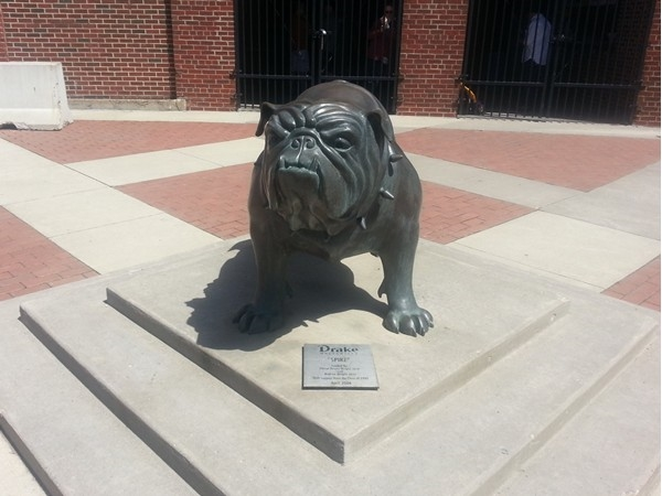 Spike the bulldog, Drake University's mascot since 1936