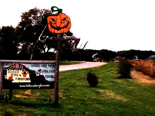 The Bellevue Berry Farm and Pumpkin Patch entrance road