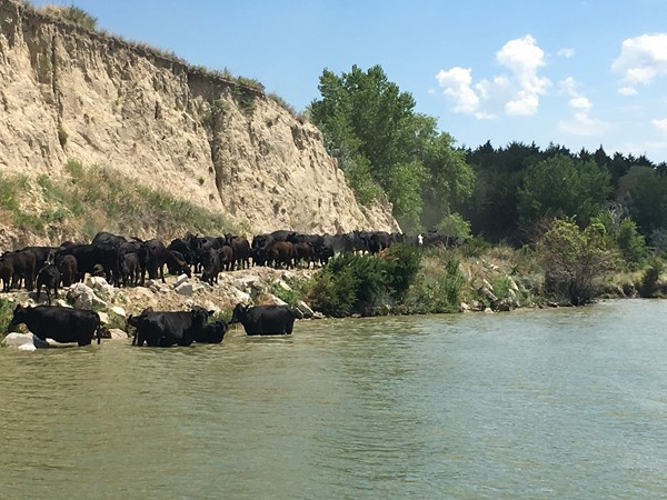 Checking cows from the pontoon at Jeffrey Reservoir! A great way to spend a Saturday in Brady