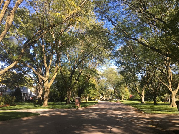 Glorious tree lined streets in established Bloomfield Hills
