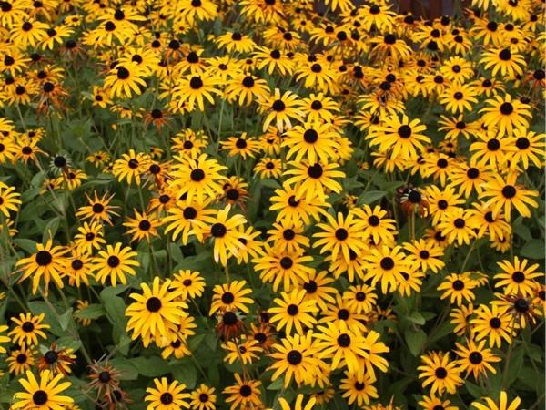 Beautiful flowers at Heritage Park