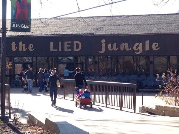 The Lied Jungle aka rainforest.