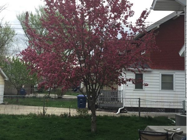 The beauty of spring in Kingman Place. Mature trees are one of the benefits of an established area!